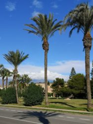 Our home town for the winter has palm trees